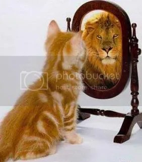 cat sees a lion in mirror photo: Mirror, Mirror kitten4.jpg