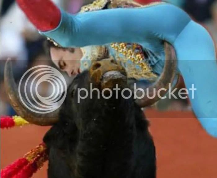 Billedresultat for bull stab bullfighter in the face