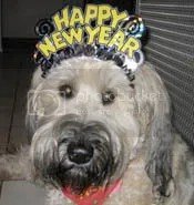 Yappy New Year