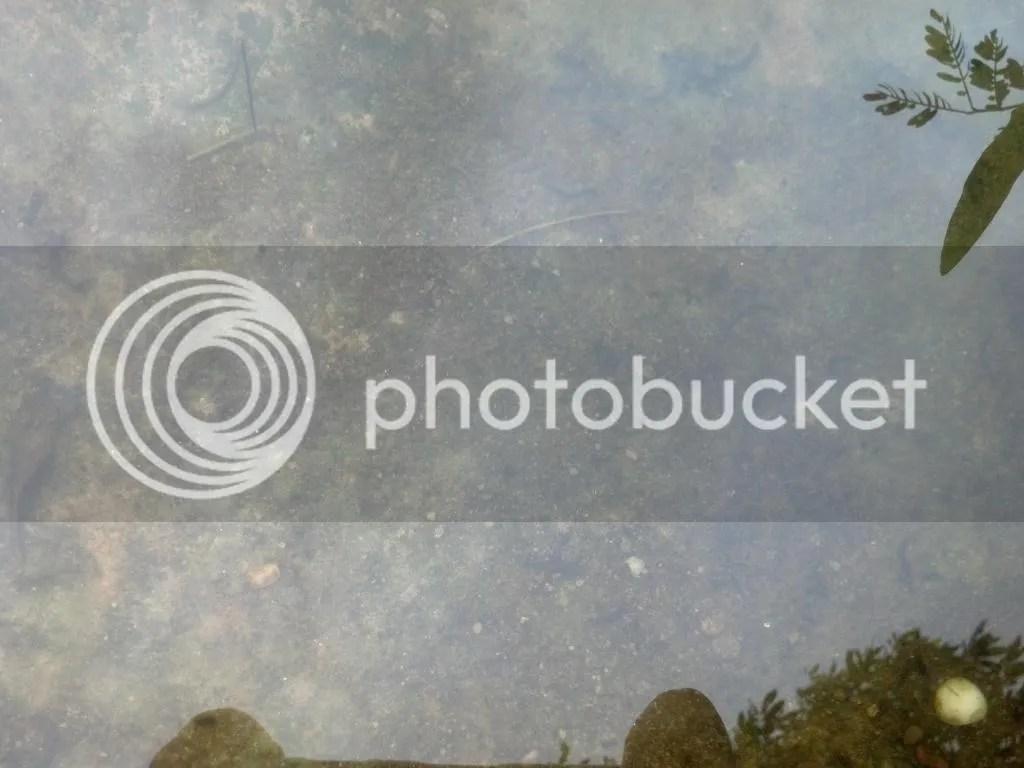 photo 2014-09-01_14-13-53_453.jpg