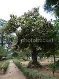 Africa,Dar Es Salaam,Tree
