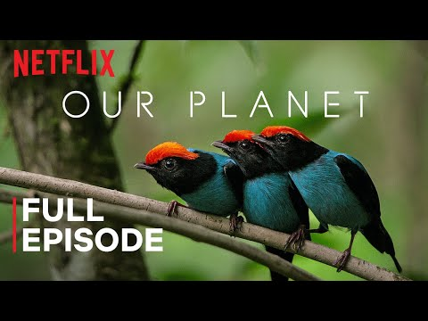 Netflix Our Planet