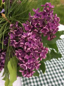 Jane's beautiful lilac display for the table