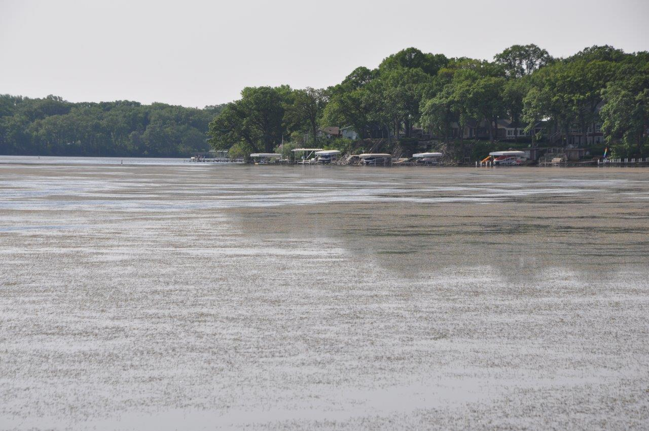 Curly Pond Weed infests East Lake Okoboji     Iowa Great Lakes Association     East Okoboji Lake Curlyleaf Presentation PDF  Link to the management  plan  coming soon