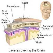 Layers of brain