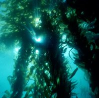 ocean-ecosystem