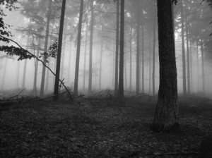 foggy_forest_1_448