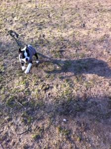 Kemper at Dog Park_01