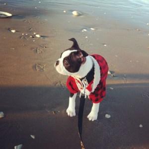 kemper at the beach