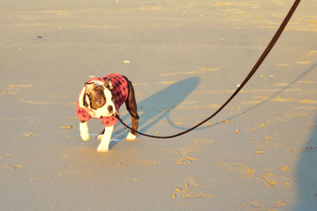 Kemper at the Beach_01