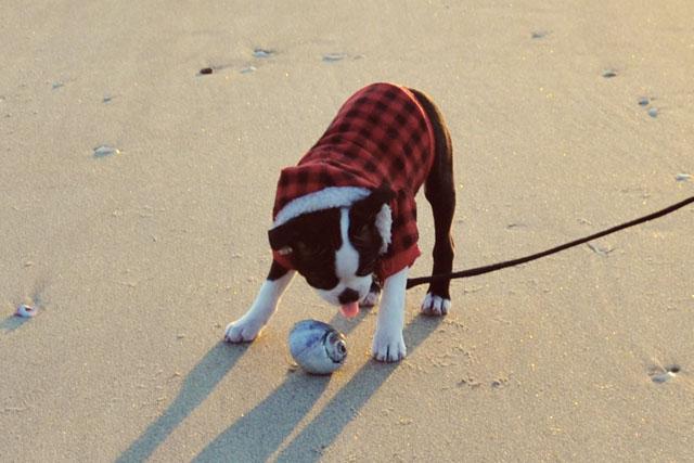 Kemper at the Beach_04