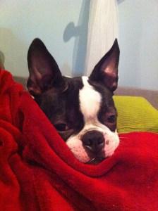 kemper and blanket