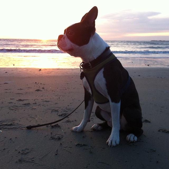 Kemper at Sunrise