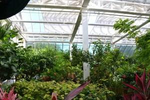 Key West Butterfly Conservatory_03