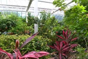 Key West Butterfly Conservatory_04
