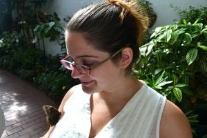 Key West Butterfly Conservatory_28