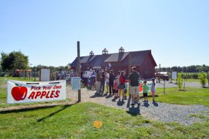 Apple Picking_Tougas Family Farm-2