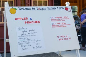 Apple Picking_Tougas Family Farm-3