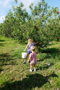 Children picking peaches of trees at farm