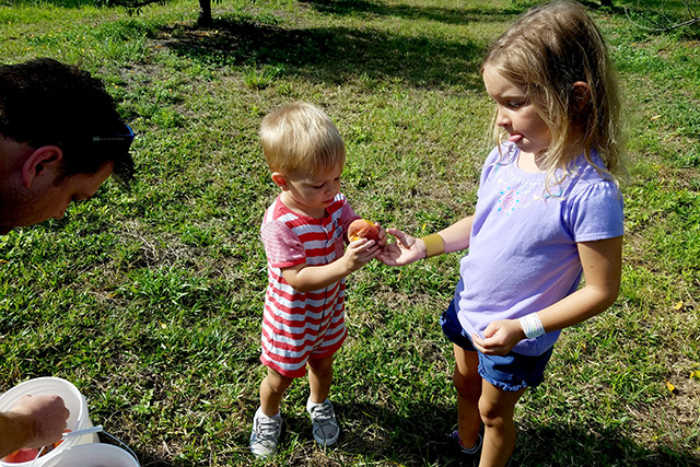 Father and children looking at peaches they have picked in white buckets