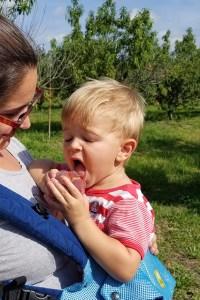 Boy on mothers chest eats a peach