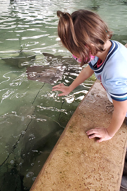 Girl Feeding Sting Rays at Jacksonville Zoo