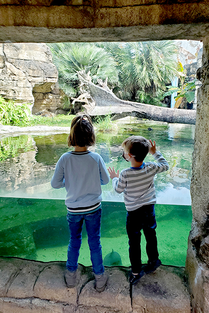 Little Girl and boy standing at zoo exhibit looking at animals