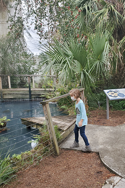 little girl lookin into koi pond