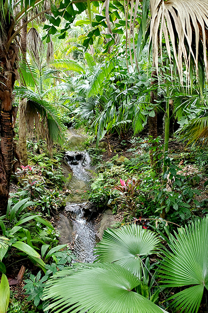 very small stream in lush foliage