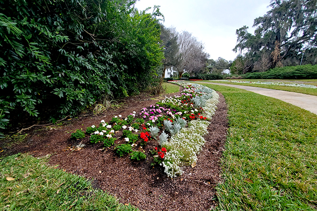 colorful flower bed at Leu Gardens in Florida