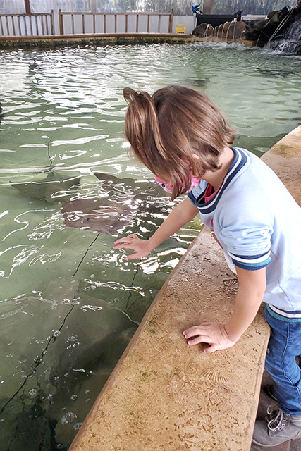 little girl at sting ray touch tank