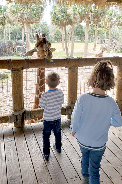 little girl and boy feeding giraffe at zoo