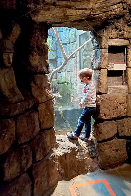 little boy wearing mask at a zoo exhibit