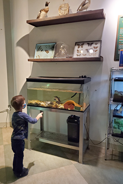 little boy standing in front of fish tank with catfish inside at Jacksonville MOSH