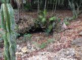 Near the cenote