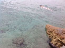 Snorkeller in the Bay of Pigs