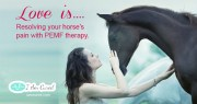 Resolving your horse's pain with PEMF therapy