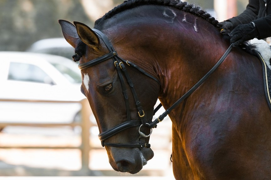 PEMF8000 Equine Device for Horse Therapy