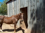 PEMF8000 Equine is Designed to Help Horses and You