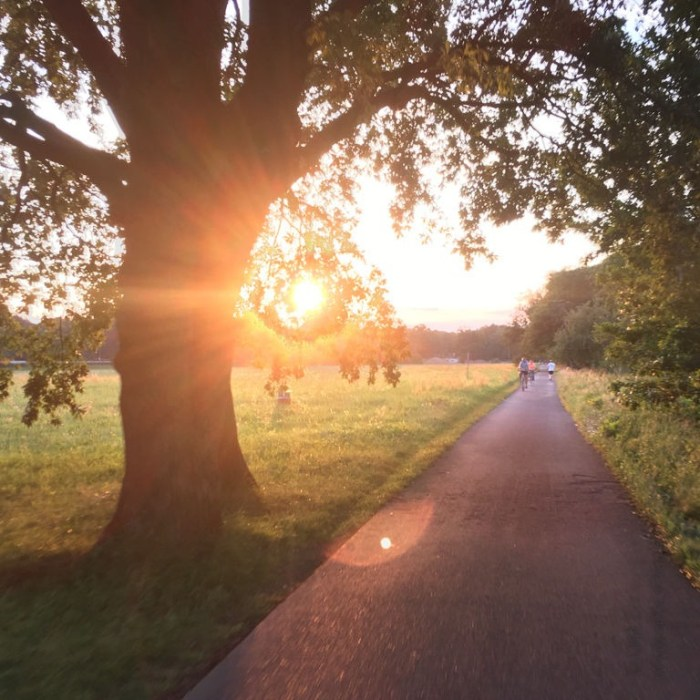 Elbe cycle path near Dresden in the evening sun