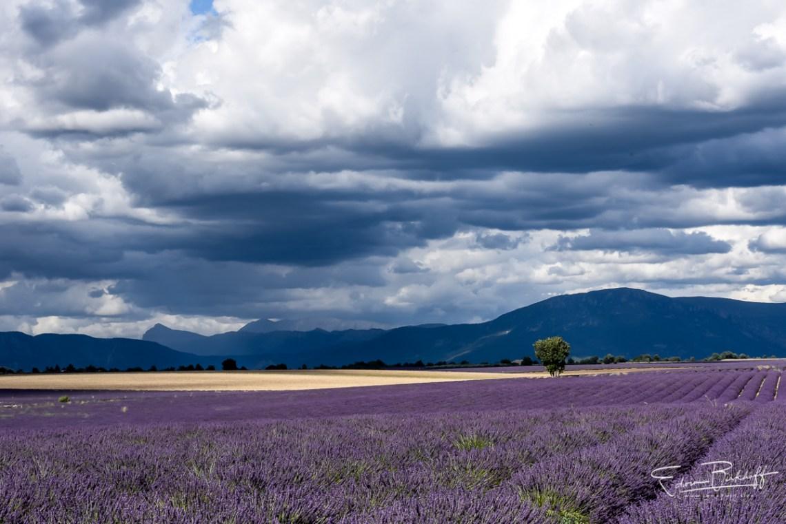 20170629_Provence_3106