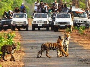 Jeep Safari in Tadoba National Park