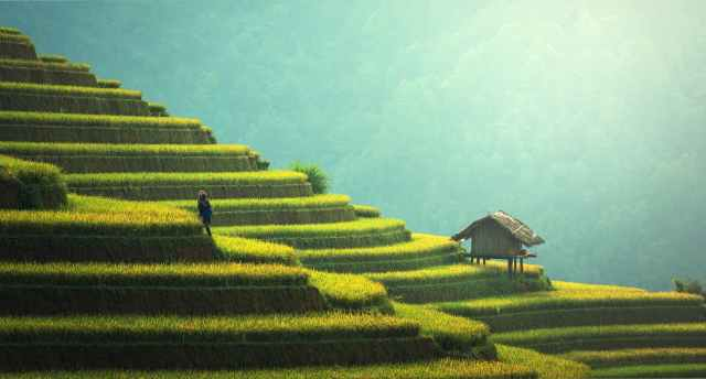 Subak-Rice-Terrace-Bali-Iaminlovewithnature