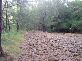 A rocky creek bed