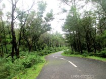 road to pomudi ponmudi sanatorium