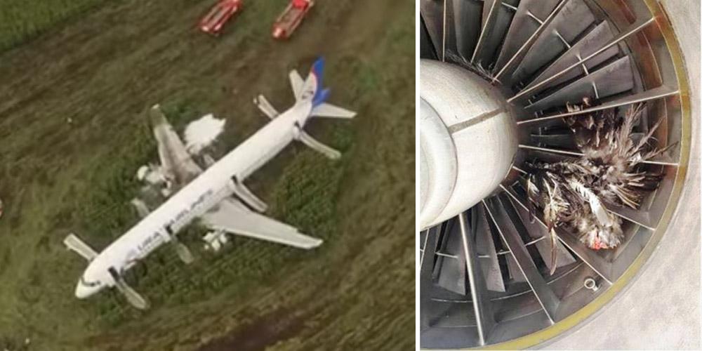 Image result for juruterbang lakukan pendaratan cemas di ladang jagung