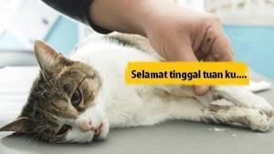 Kucing Kesayangan Bertarung Nyawa, Lelaki Ini Hanya Mampu Meraung