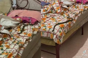 Dua Beradik Terkejut Besar, Ular Sawa Jatuh Dari Siling Bilik Tidur