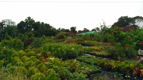 Chiong Garden