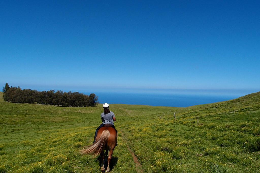 Did you know that the Big Island is cowboy country? Horseback riding is one of the 7 Things You Must Do On The Big Island, Hawaii.